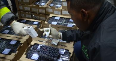 Puerto de Barranquilla inicia exportación de arándanos a través de su bodega de refrigerados