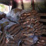 Gobernación del Atlántico apoya a campesinos del departamento para la comercialización de la yuca